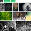 WordPress Awesome Gallery with jQuery