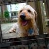 jPhotoGrid – Zoomable jQuery Image Gallery